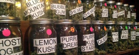 Le infiorescenze di cannabis sono tutte uguali?